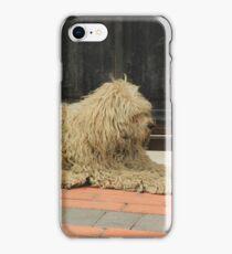 Shaggy White Dog iPhone Case/Skin