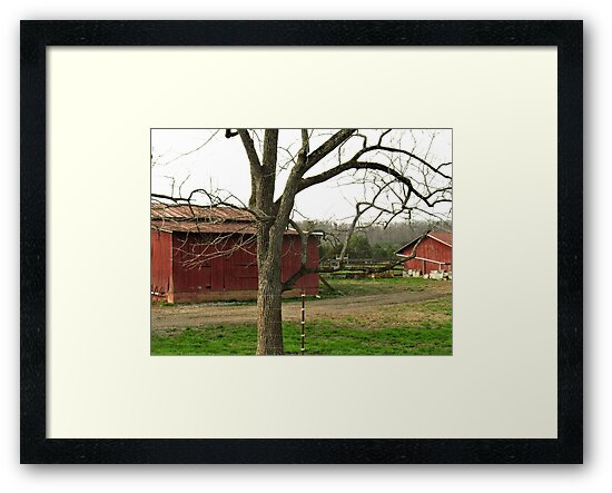 """""""Twisted All About, Naturally""""... prints and products by © Bob Hall"""