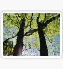 Springtime Morning With Twin Forest Trees  Sticker