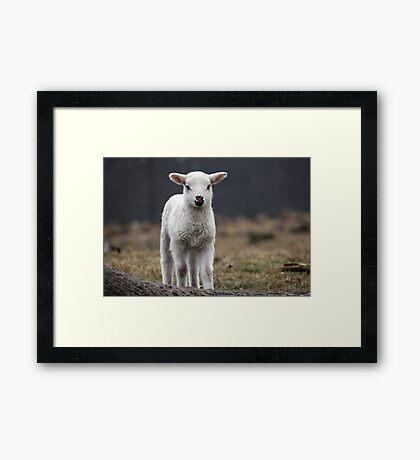 It is Spring Framed Print