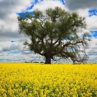 Tree and Canola by Hans Kawitzki