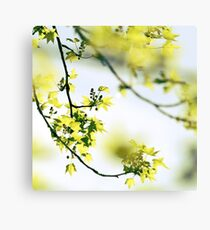 Once upon a spring Canvas Print