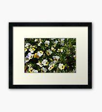 Yellow white flowers in the garden. Framed Print