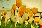Yellow Tulips by Elaine Teague