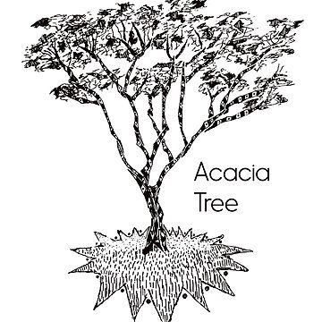 Acacia Tree by Hinterlund