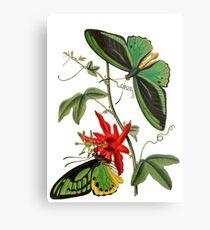 FF - Butterfly-5 Metal Print