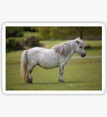 Miniature Horse. Sticker
