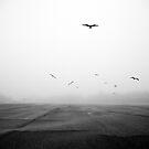 Solitude by Alex Kotlik