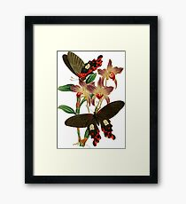 FF - Butterfly-6 Framed Print