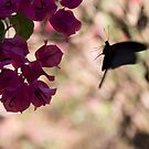 Butterfly flying over Flowers in Koh Kood by Clara Go (missatgerebut)