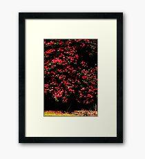 Camelia bush Framed Print