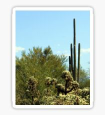 Saguaro/Grizzly Bear Cactus Sticker