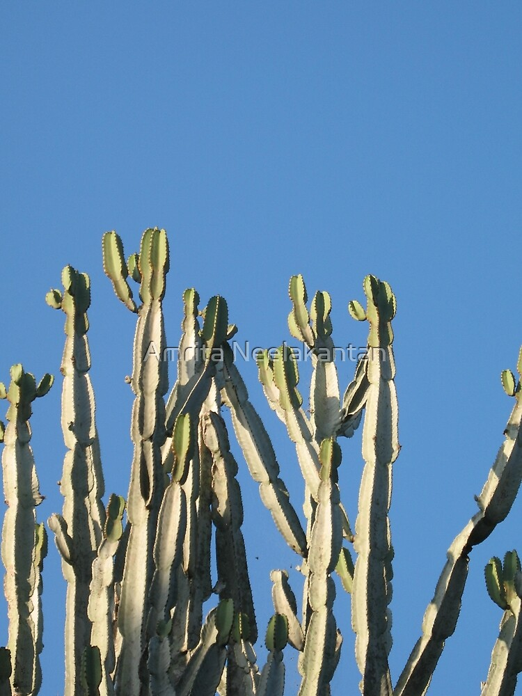 Cactus Cluster Sky by Amrita Neelakantan