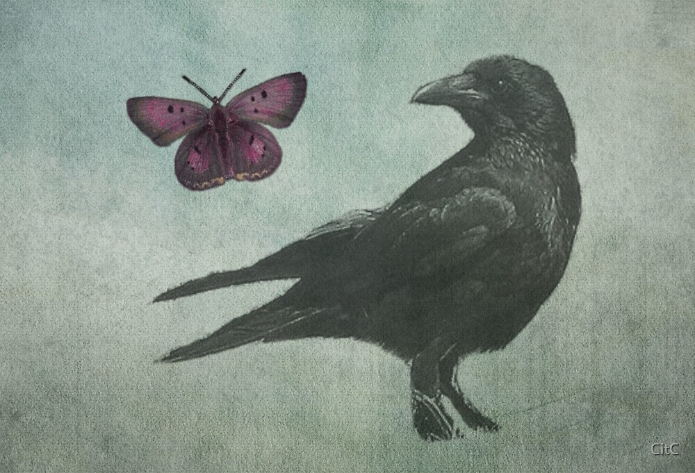 Black Crow and Butterfly by CitC