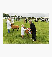 Agricultural Show sheep competition Photographic Print