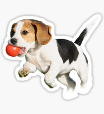 Beagle with Ball Sticker