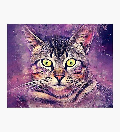 Cat John Photographic Print