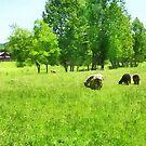 Grazing Sheep by Susan Savad