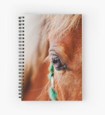 Miniature Brown Horse Filly Eye Golden Mane Teal Bridle Spiral Notebook