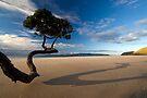 Summers last Rays by Michael Treloar