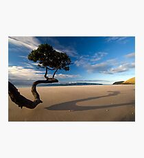 Summers last Rays Photographic Print