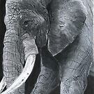 """""""The Watchful Pachyderm"""" by Wendy Sinclair"""