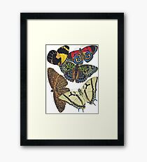 FF - Butterfly-7 Framed Print