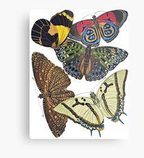 FF - Butterfly-7 Metal Print