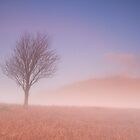Mist at Daybreak by Jeanie