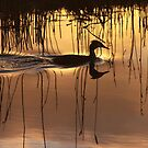 Great Crested Grebe in Silhouette by Jo Nijenhuis