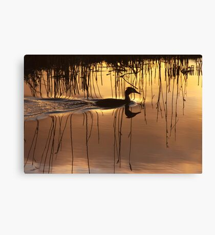 Great Crested Grebe in Silhouette Canvas Print