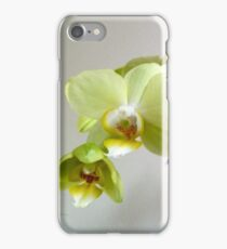 Phalaenopsis orchid iPhone Case/Skin