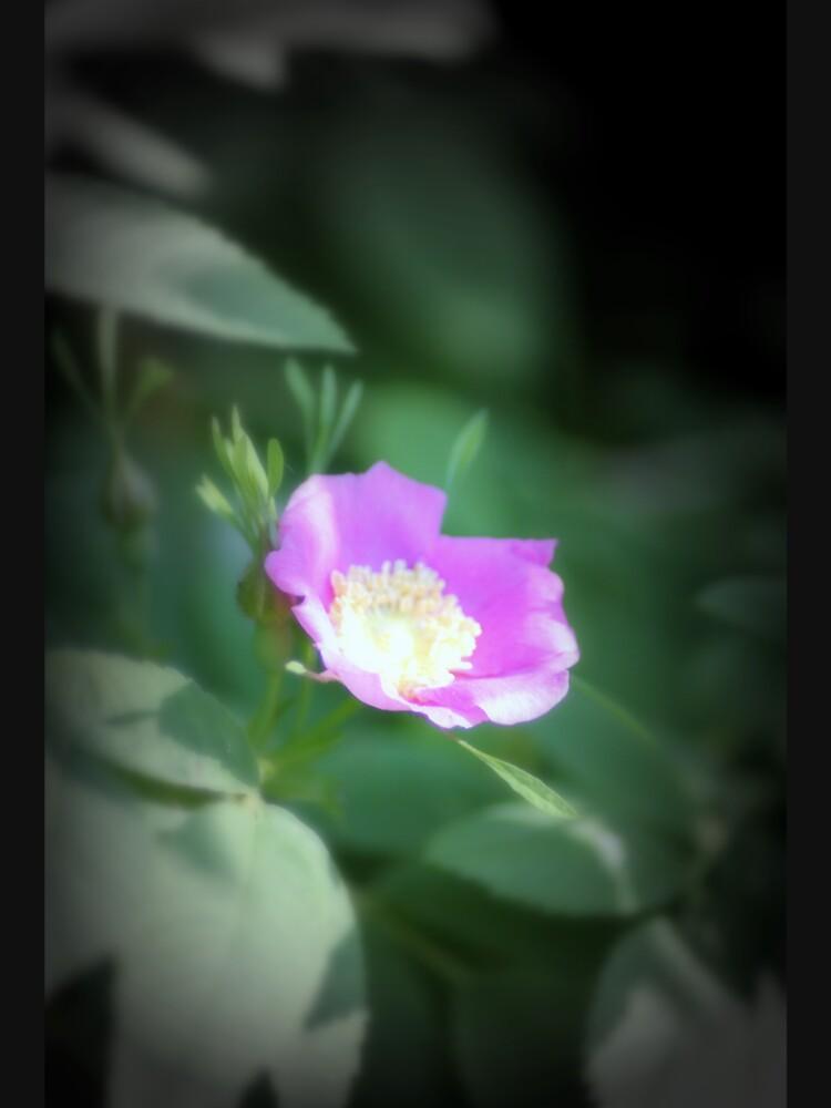 Old fashioned pink rose, near Trojan pond, Oregon by DlmtleArt