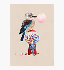 Bird gumball machine Kookaburra Photographic Print