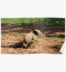 Elephant - Africa (9) Poster