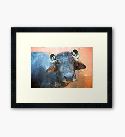 Buffalo Girl Framed Print