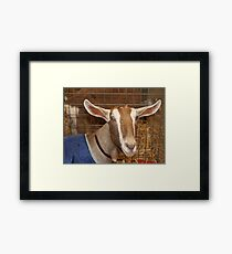 Smiling Goat, farm animal pet Framed Print