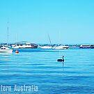 Swan - Image Of Western Australia by Robert Phillips