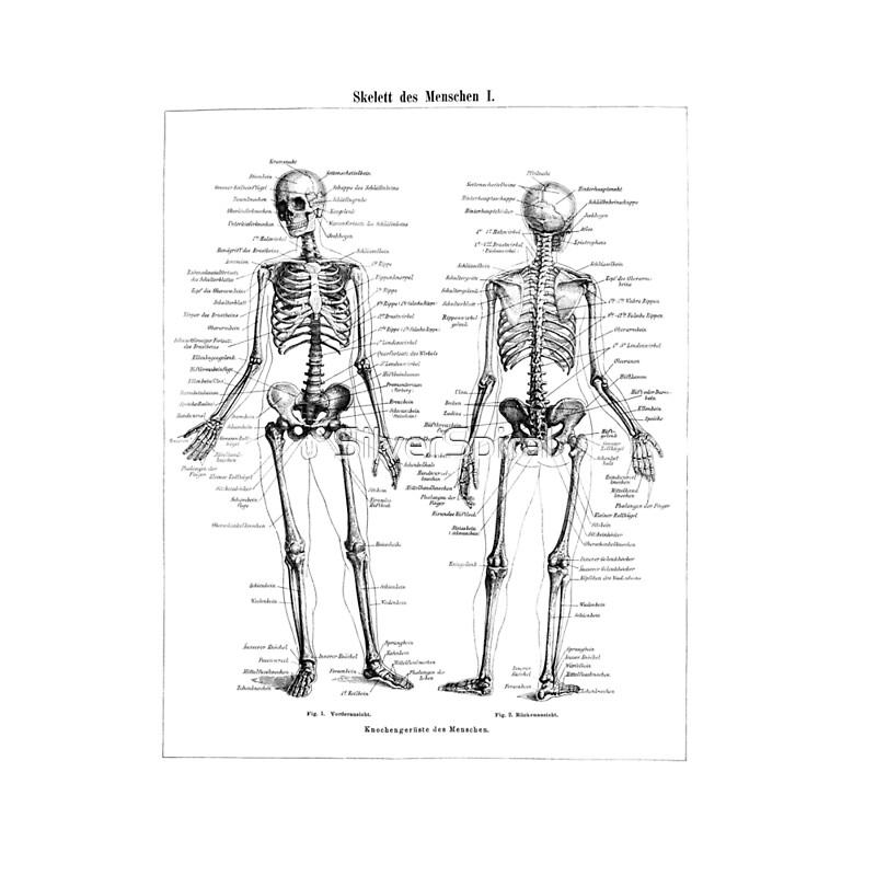 Moderno Anatomía Cerdo Fetal Etiquetado Imagen - Anatomía de Las ...