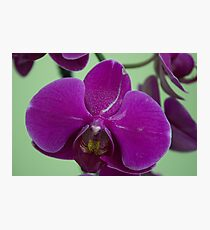 Orchid Macro Photographic Print