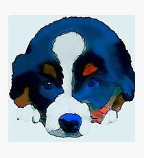 Puppy Dog Photographic Print