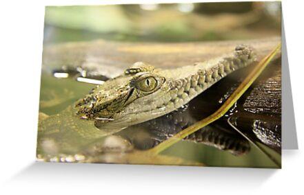 Baby Crocodile by Sophia Phoenix