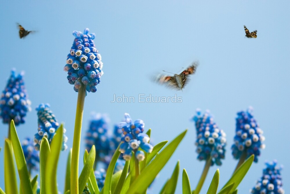 Something in the air... by John Edwards