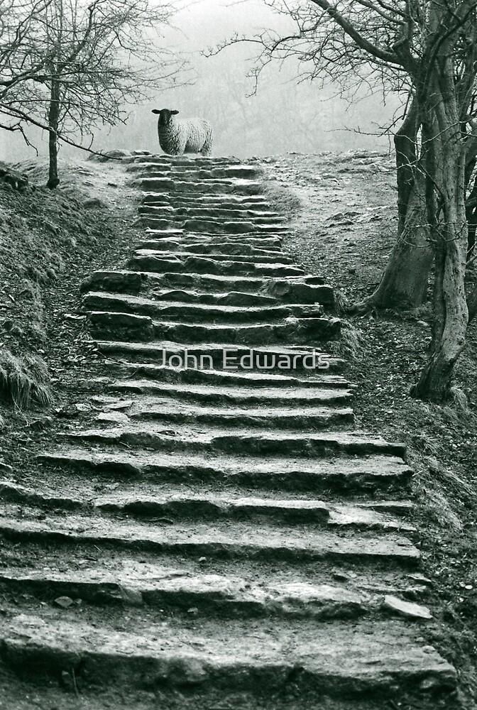 Steps by John Edwards