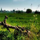 The field by John Edwards