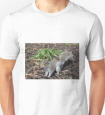 Tame Squirrel  T-Shirt