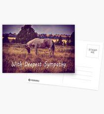 Horse Sympathy Postcards