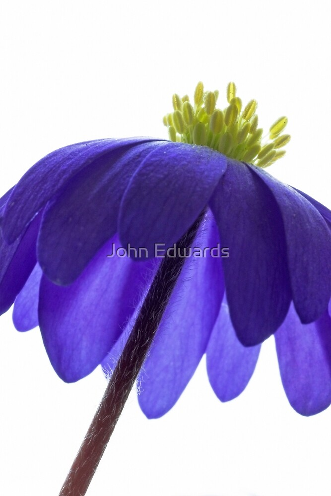 Blanda by John Edwards