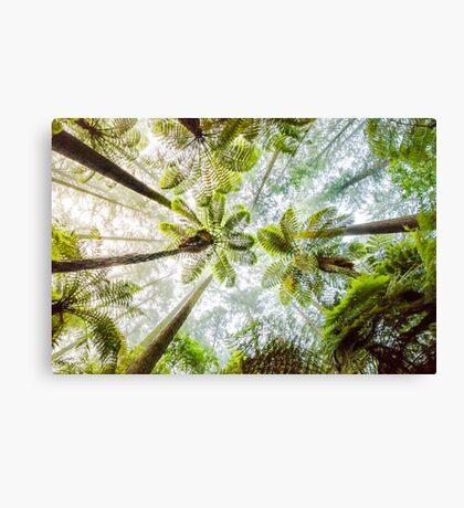 Morning Forest Fog - Redwoods, Whakarewarewa Canvas Print