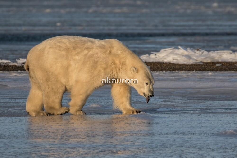 STOCK ~ Raspberry ... Polar Bear Style by akaurora